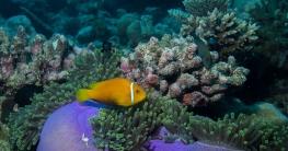 360 grad unterwasserkamera